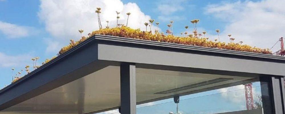 [ Ulyces ] Aux Pays-Bas, des centaines d'abribus couverts de fleurs pour sauver les abeilles